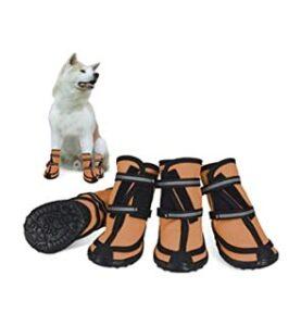 scarpe-per-cani