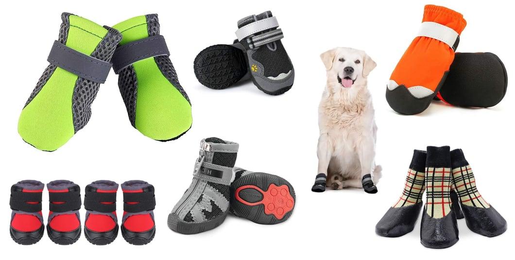 scarpe-per-cani-miglioreinrete