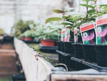 giardino-e-bricolage